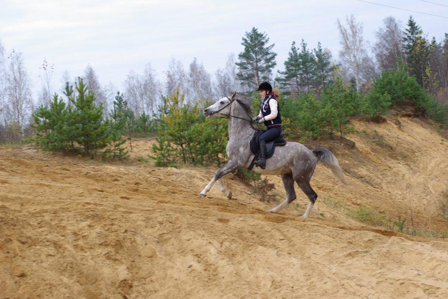лошадь понесла что делать