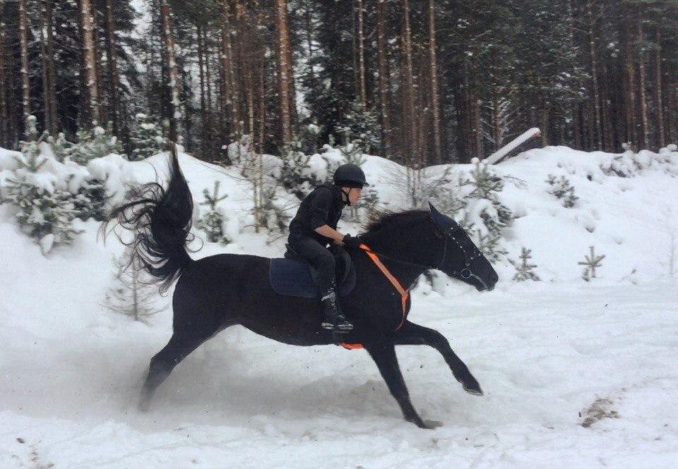 Что делать, если лошадь понесла?