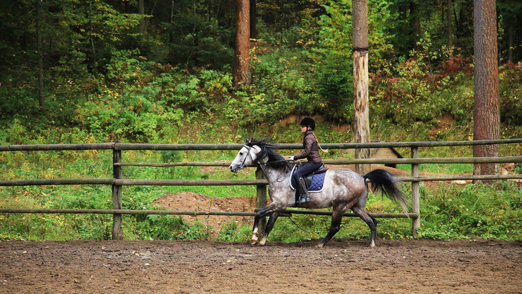 Ты боишься не темноты, ты боишься того, что в ней — о страхе в конном спорте